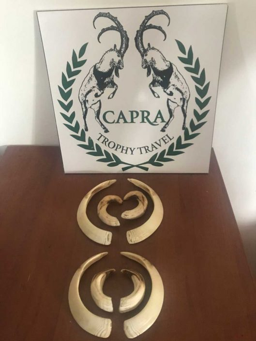 CAPRA Trophy Travel